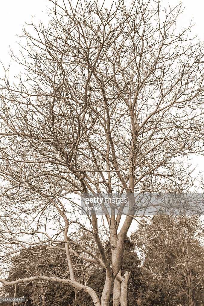 branches of the tree. : Stock Photo