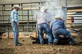 A group of cowboys branding a steer