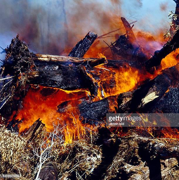 Brandrodung zur Landgewinnung fuer Teeplantagen und Zuckerrohrfelder fuehrt zur fortschreitenden Vernichtung von Regenwald in Nordostaustralien