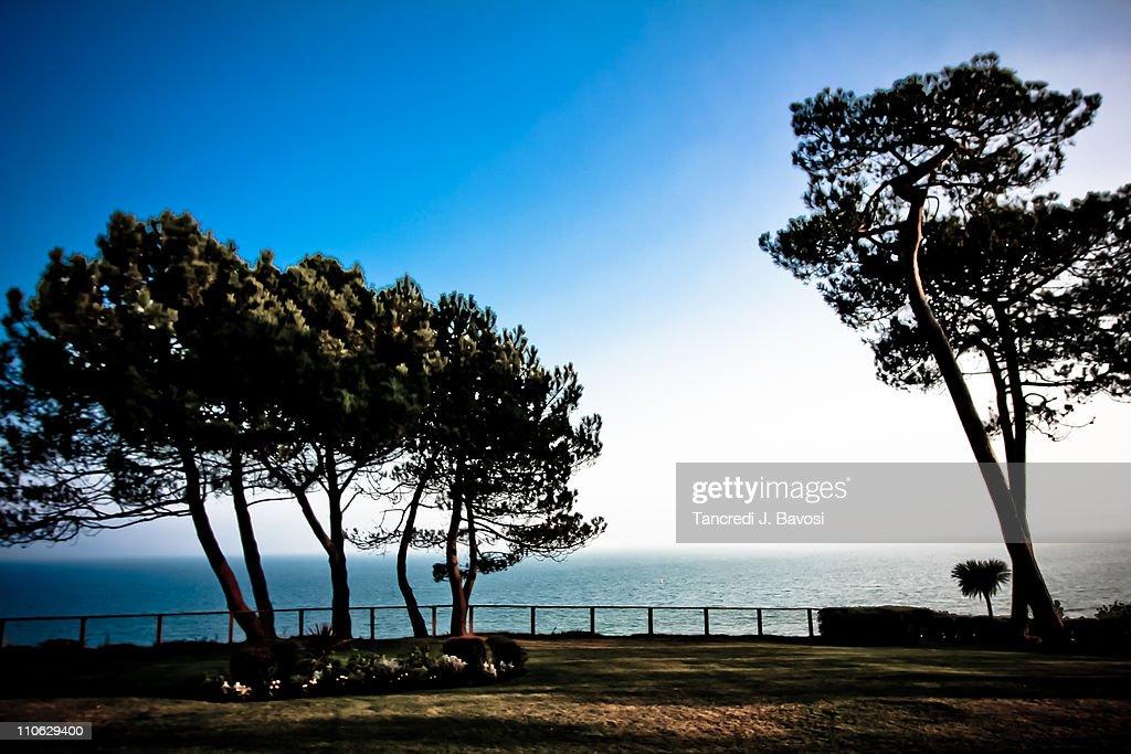 Branksome Park Cliff