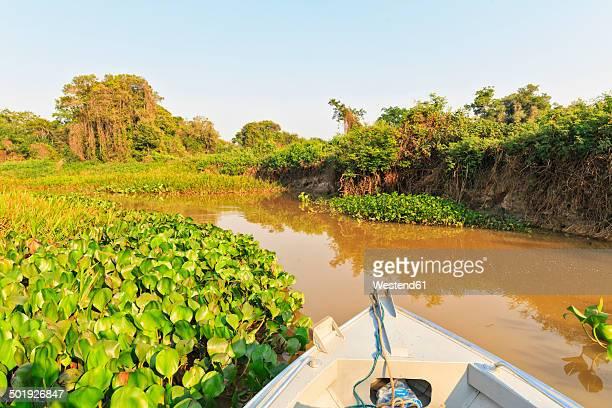 Brazil, Mato Grosso do Sul, Pantanal, Branch of Cuiaba River