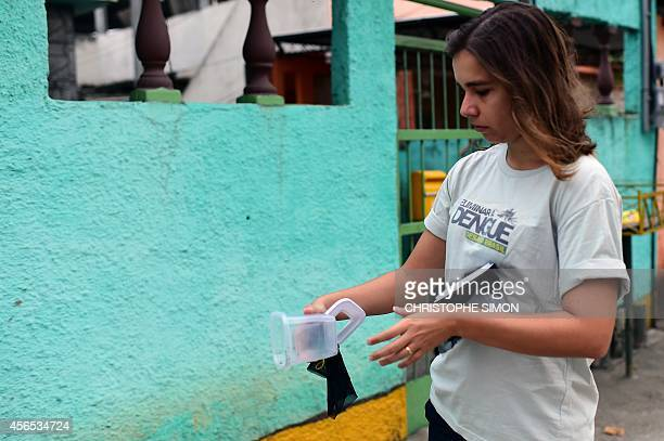 Brazilian biologist Mariane da Rocha Davi releases some of 10000 Aedes aegypti mosquitoes infected with the Wolbachia bacterium which reduces...