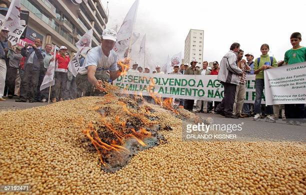 Brazilian peasant member of the Landless Workers Movement burns transgenic soy seeds during a demonstration before the opening ceremony of the 8th...