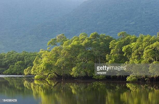 Forêt amazonienne brésilienne