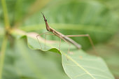 This insect is very common Brazilian Savannah.
