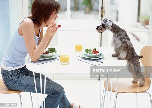 Breakfast with dog