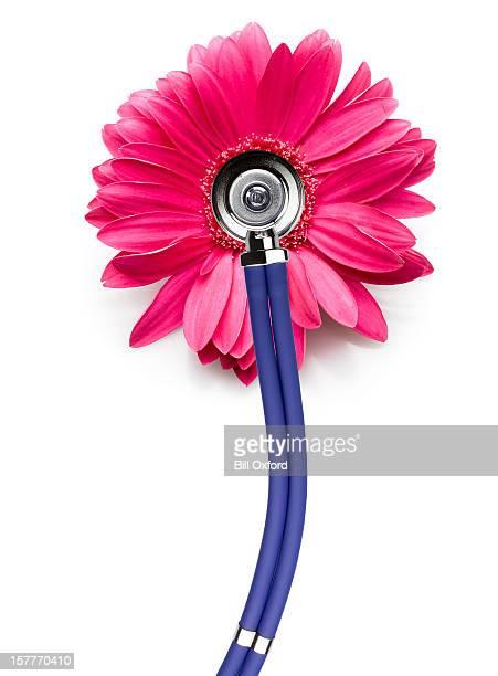 cancer du sein. Stéthoscope sur Fleur