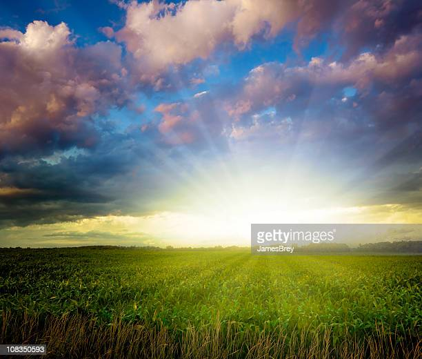 Superbe coucher de soleil sur champ de maïs du Midwest