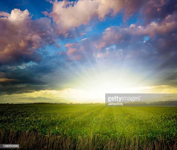 Atemberaubende Midwest Sonnenuntergang über Corn Field