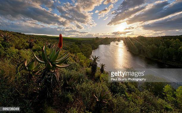 Breede River Aloe Sunset