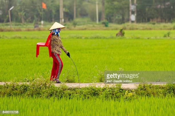A breeder, in Thua Thien province (vietnam)