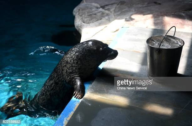 A breeder prepares ice cubes for a sea lion at Hefei Aquarium on July 25 2017 in Hefei Anhui Province of China Breeders work at Hefei Aquarium...