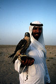 Breeding hawks in Abu Dhabi in the United Arab Emirates in 1987 Elevage de faucon a Abou Dhabi dans les émirats arabes unis en 1987