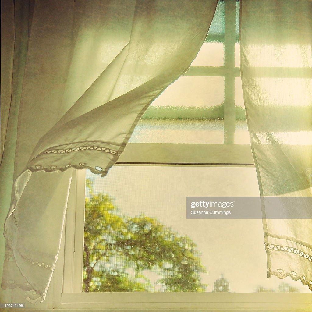 Breezy : Stock Photo
