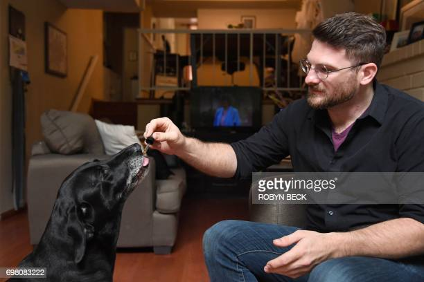 Brett Hartman gives his dogs Cayley a sixyearoldLabrador Retriever drops of a cannabis based medicinal tincture to treat hip pain and anxiety June 8...