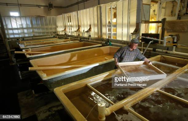 Brian Beal works in the hatchery at the Downeast Institute on September 9 2015 Beal is the director of research at the institute in Beals and a...