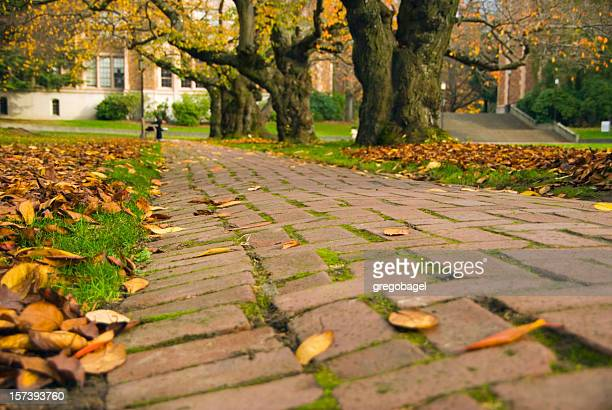 Brick path in the quad at University of Washington