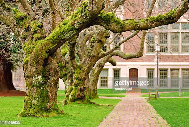 Brick Fußgängerweg und Bäumen an der University of Washington quad