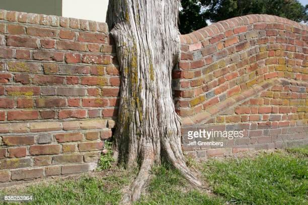 A brick wall built around a tree at Grace Episcopal Church