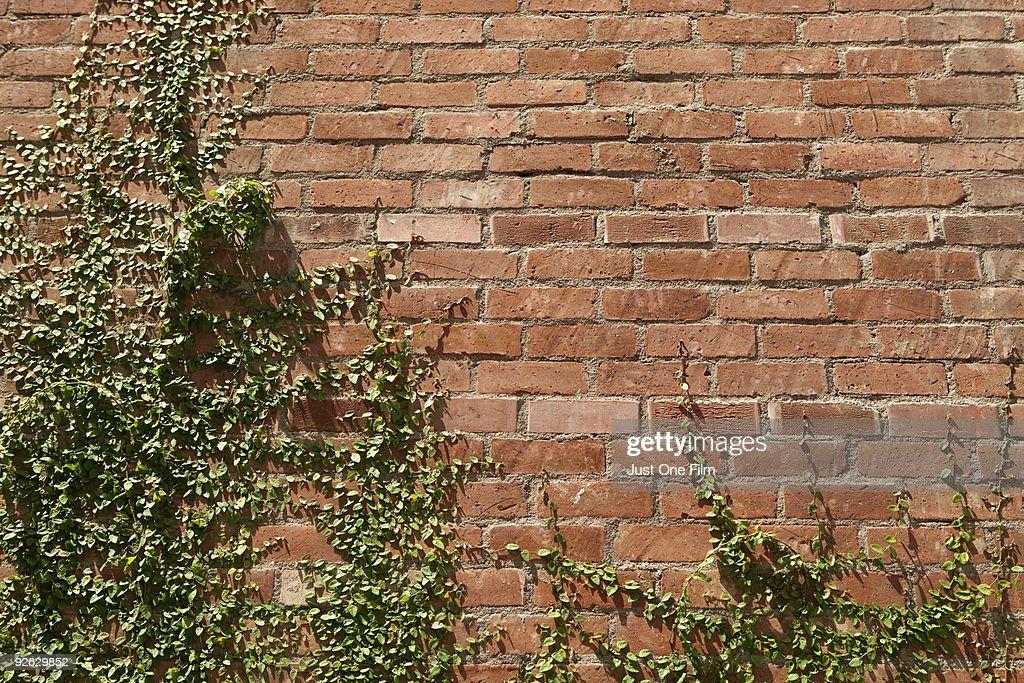 Brick Wall & Ivy : Stock Photo