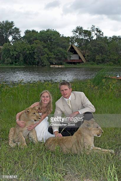 Bride and Groom with Two Lion Cubs (Panthera Leo). Antelope Park, Gweru, Midlands Province, Zimbabwe, Southern Africa