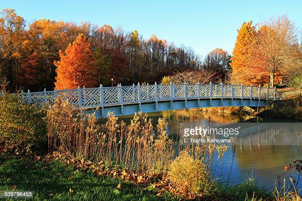 Bridge and Autumn Trees