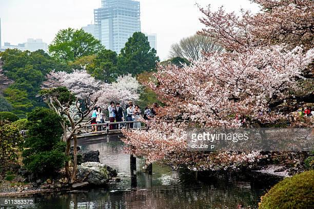 江戸の公園の橋