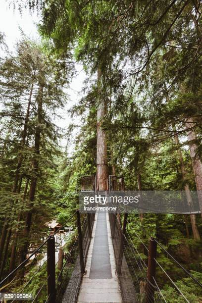 bridge in the forest in british columbia