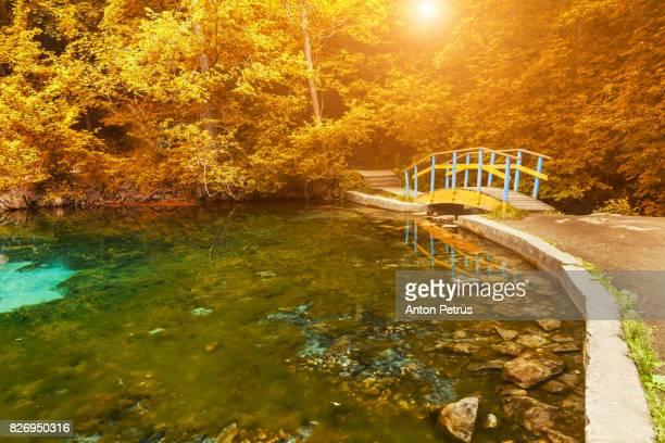 Bridge reflecting in still pond in japanese garden