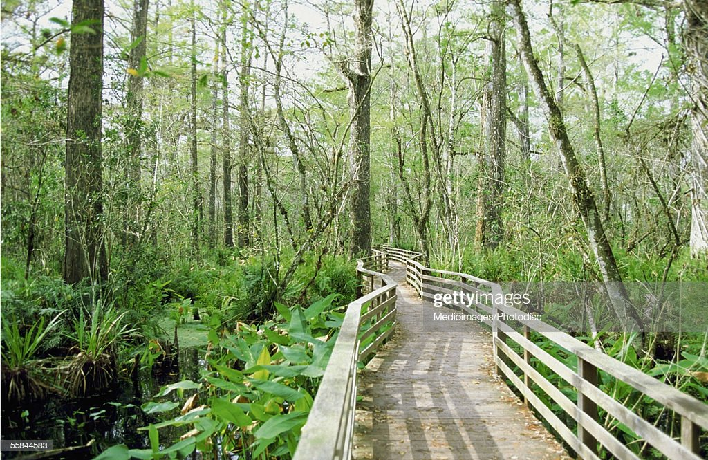 Bridge through Corkscrew Swamp Wildlife Sanctuary, Florida, USA : Stock Photo