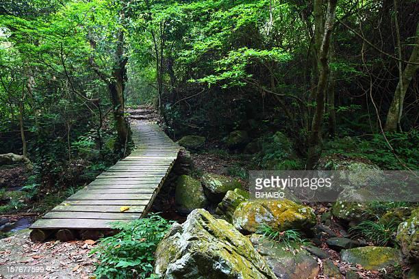 Brücke durch den Wald