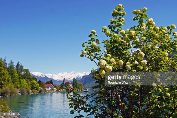 Brienz town with lake, Swiss Alps with snow-capped peaks.