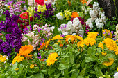 Bright and colorful spring flowers on flowerbed nature background