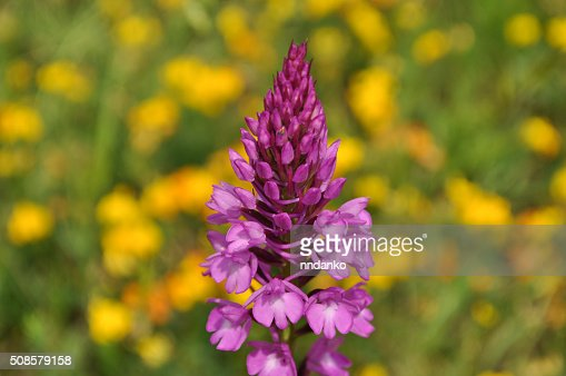 Bright flower in the field : Stock Photo