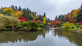 Seattle Japanese Garden, WA, USA