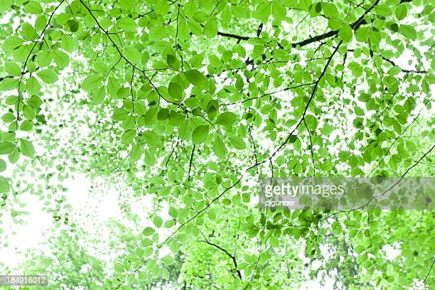 Bright green foliage background