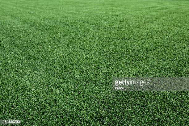 Bright green grass field in daylight
