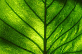 Close up shot of a bright green leaf