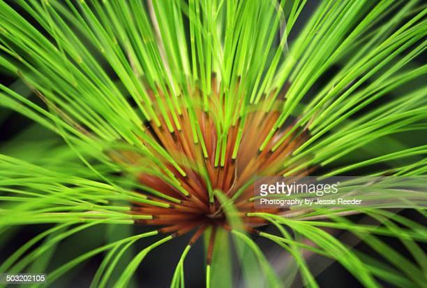 Bright green symmetrical plant macro