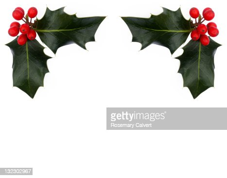 Bright holly berries and leaves, copy space below. : Stock Photo