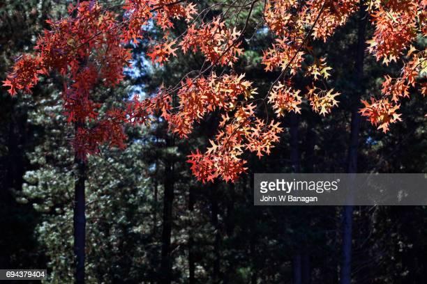 Bright , in Autumn, Victoria, Australia