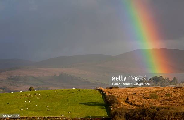 Bright rainbow shining through storm clouds to the ground with sheep grazing in a lush green pasture, near Sneem