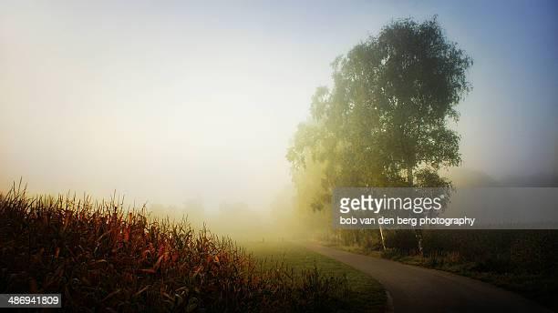 Bright Scenery