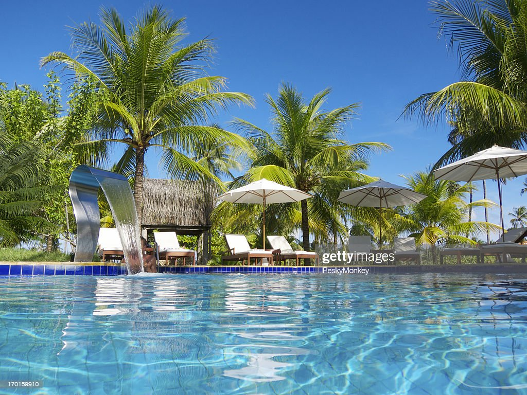 Bright Tropical Swimming Pool With Palm Trees Patio Stock Photo Getty Images