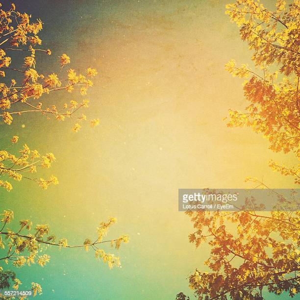 Bright Yellow Leaves Against Sky