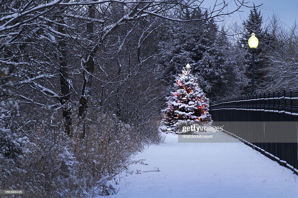 Brightly Lit Snow Covered Christmas Tree In Snowstorm : Stock Photo