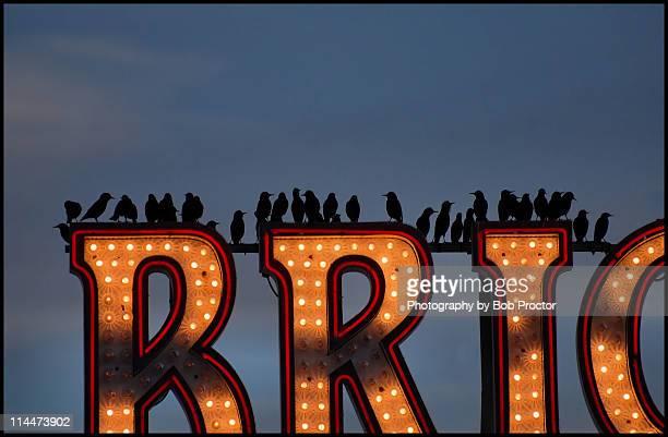 Brighton collective
