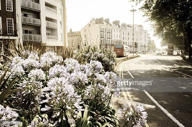 Brighton town with street and flowers