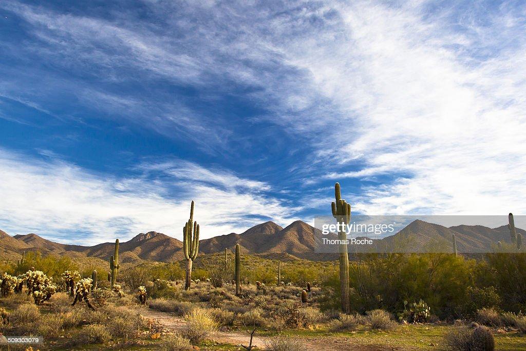 Brilliant blue sky over the desert in Scottsdale