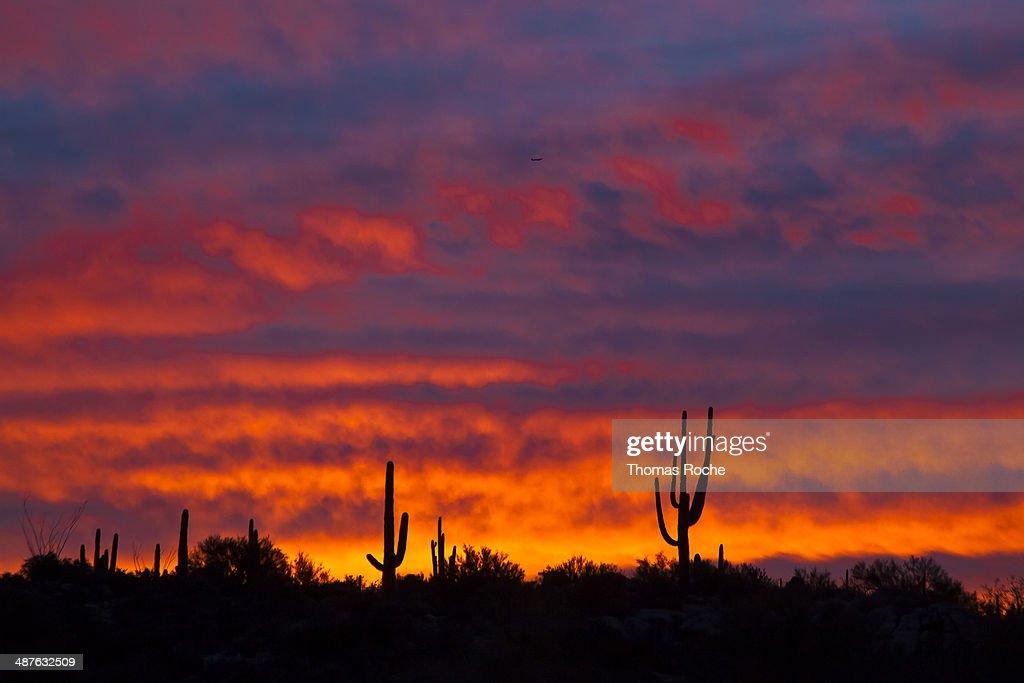A brilliant sunrise in the Sonoran desert